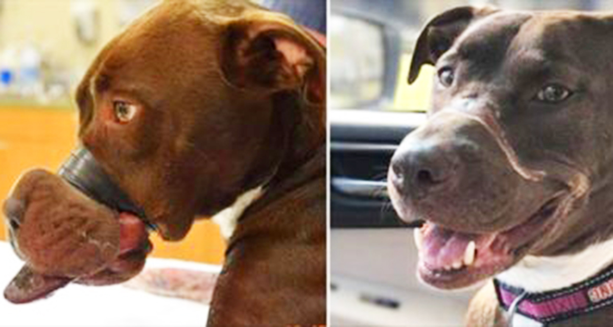 Хозяин замотал собаке пасть скотчем и бросил ее умирать… Теперь свершилось правосудие и живодер наказан!