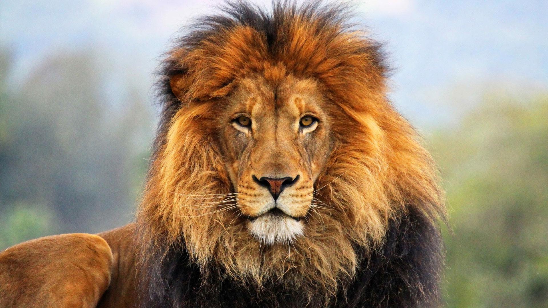 По дате рождения узнайте какое у Вас тотемное животное. Это потрясающе!