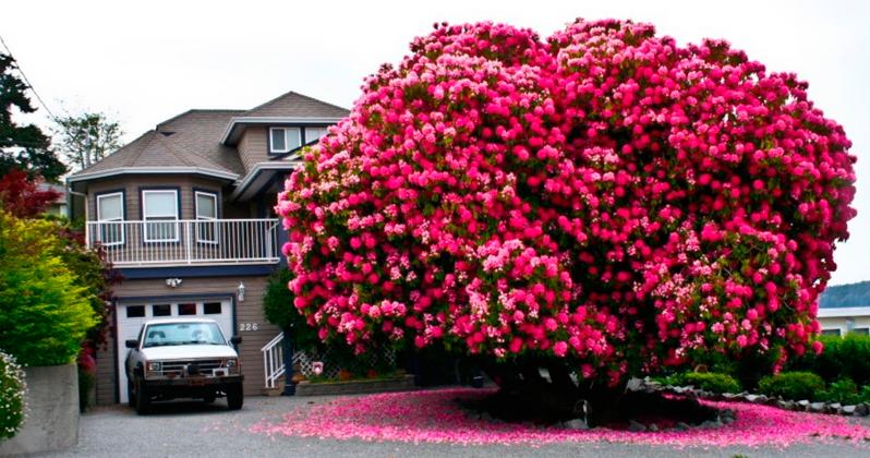 Это самые красивые деревья мира. Невероятно!