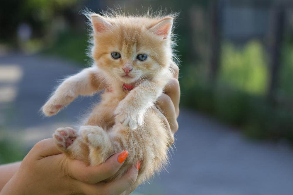 Шла на работу, идут три пацана несут маленького котенка куда-то, что-то мне в этом не понравилось, решила проследить...