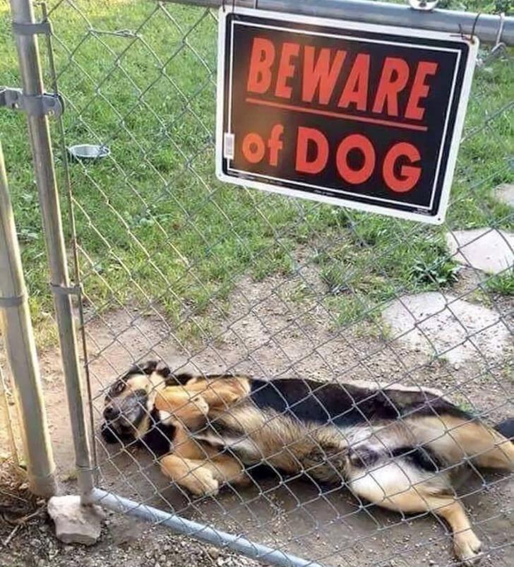 18 собак, которых поставили охранять двор, а как это делать — не объяснили