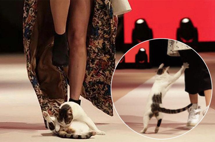 Котик наподиуме иеще 4 случая, когда животные делали мероприятия еще лучше