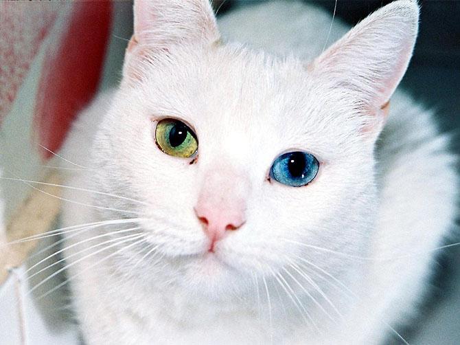 Я спасла бездомного больного котенка, а он подарил мне финансовую самостоятельность!