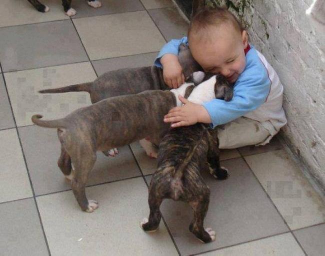 детям нужны домашние животные