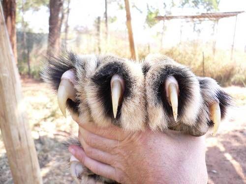 Эти животные поражают своими размерами, такого вы точно не ожидаете увидеть