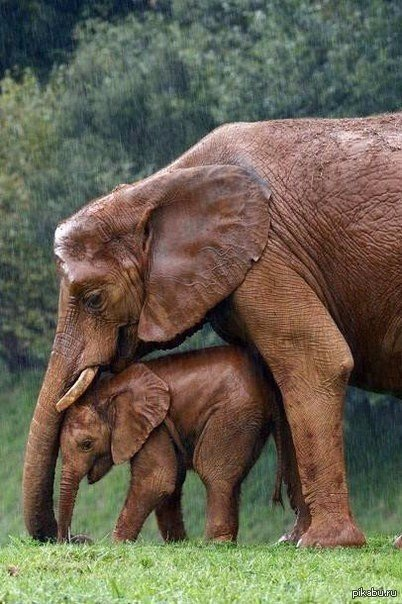 Фото милейших и очаровательных животных, которые дарят позитив