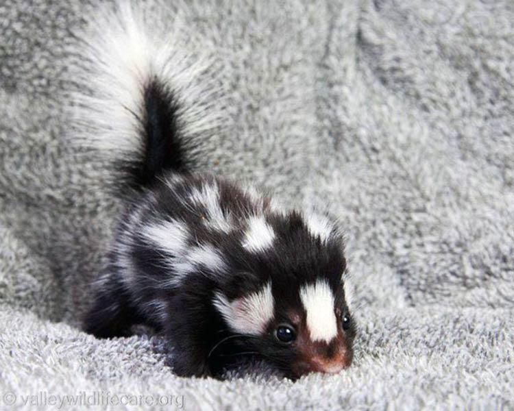 милые детеныши животных фото