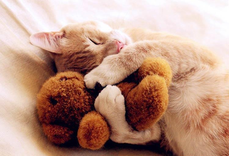самые милые картинки животных