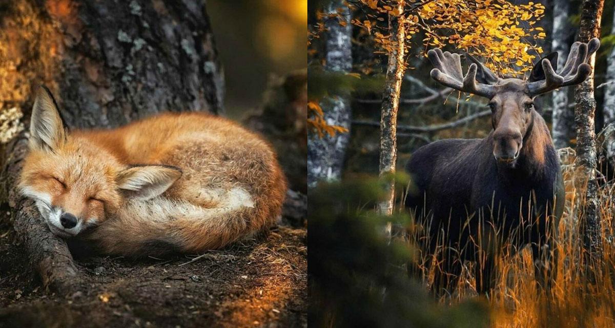 Сказочные снимки из лесов Финляндии