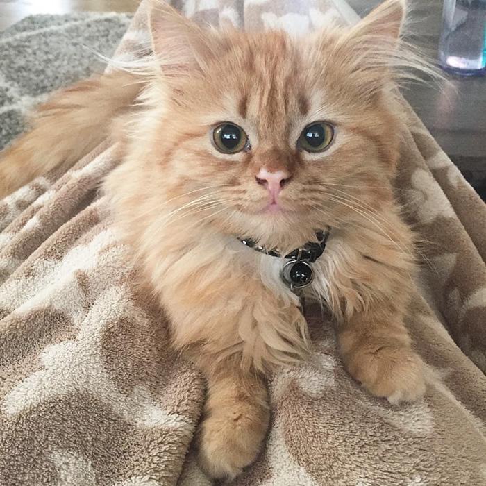 кошка которая не перестает улыбаться