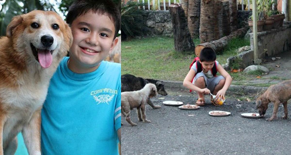 Школьник тратил все карманные деньги на покупку питания для бездомных животных