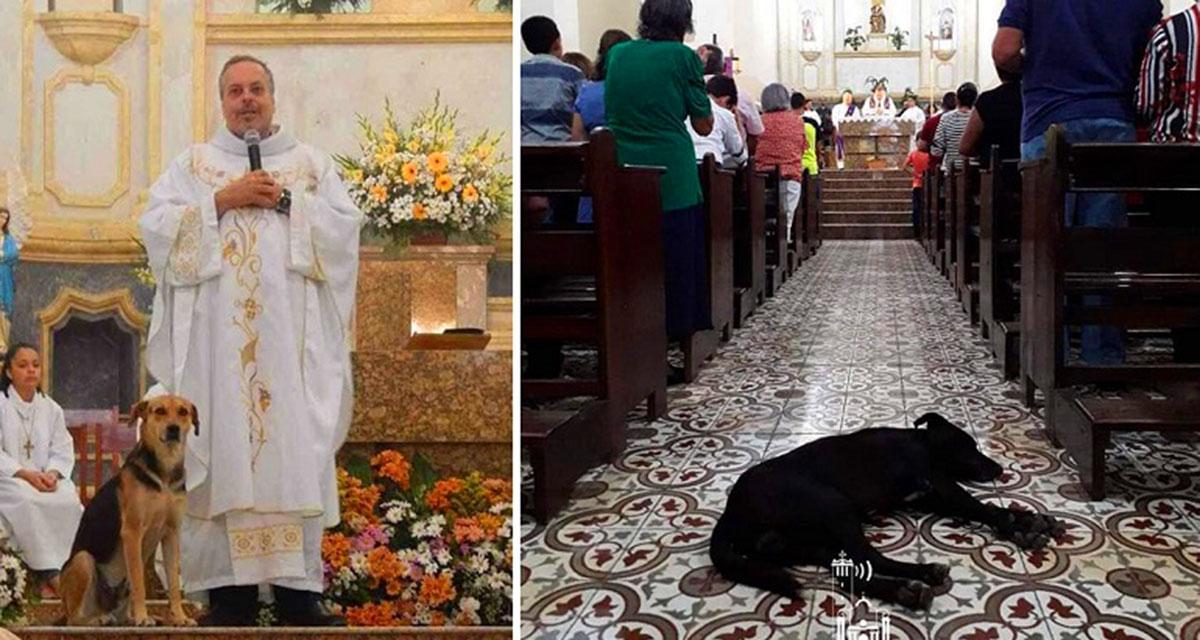 Священник из Бразилии приютил в церкви бездомных животных и ищет им дом