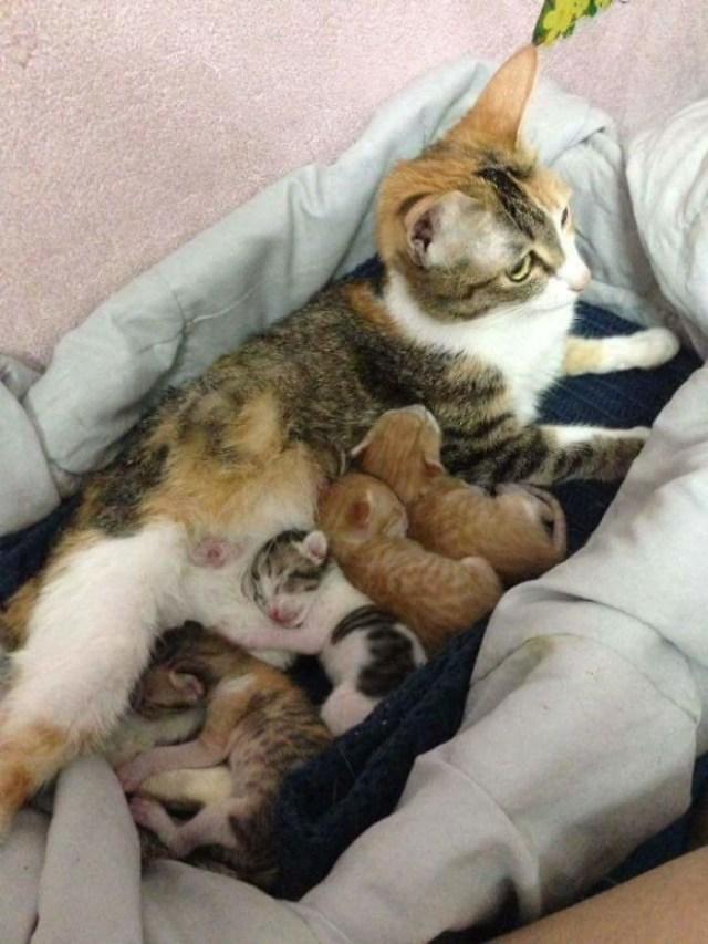 Кот поддержал кошку во время родов и этим покорил тысячи сердец