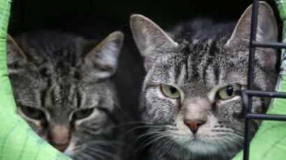 """Наркокурьер"""" и """"толстый кот"""": три истории о подмене животных - BBC ..."""