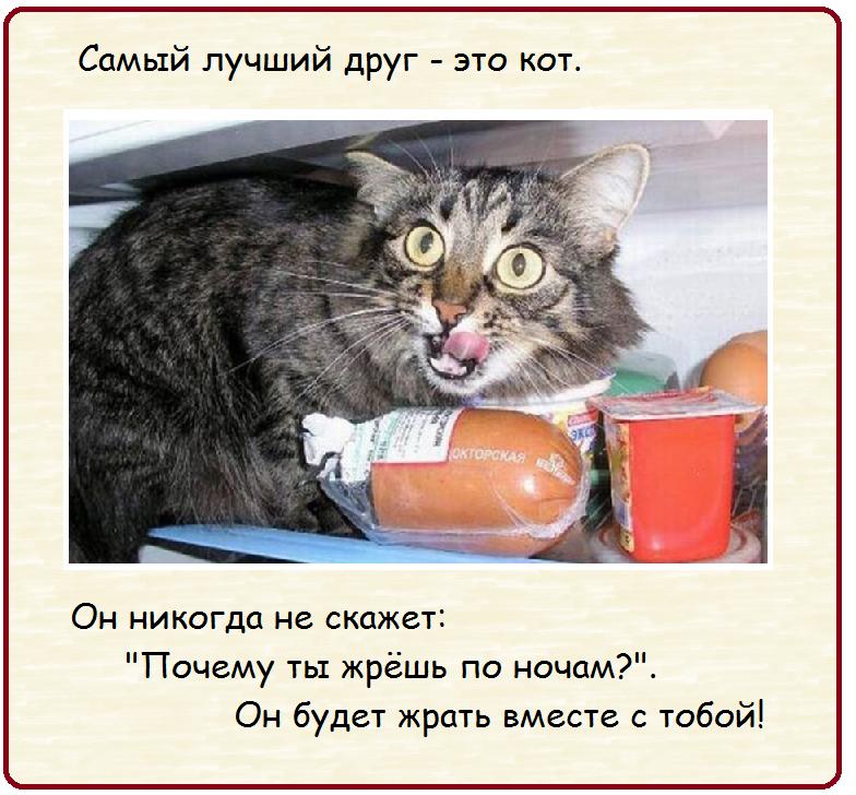 И кот, и анекдот   Развлечения   Селдон Новости