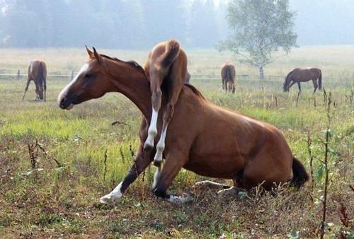 Stupid foal